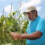 Mejoras en vialidad agrícola y agua Garantizan sacar cosecha de maíz y papa